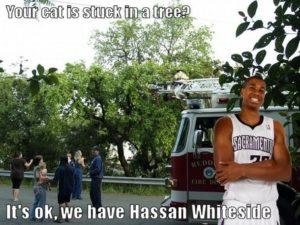 Whiteside_Cat_In_Tree_medium.jpg